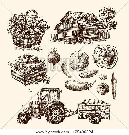 Set of eautiful hand drawn  illustration eco farm. Sketch style.