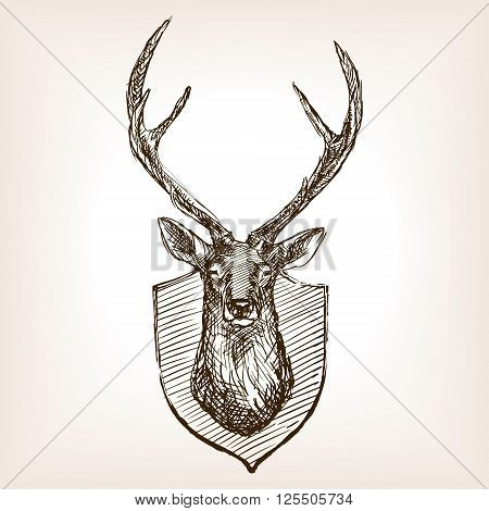 Deer head trophy sketch style vector illustration. Old hand drawn engraving imitation.