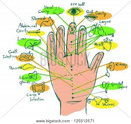 Illustrated Reflexology Hand Chart, palmar view. Vector.