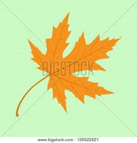 Maple Leaf. Illustration. Autumn Maple Leaves. Vector illustration.