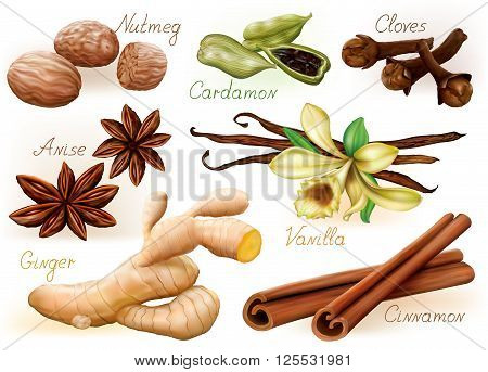 Different aromatic spices set on white background. Vector Illustration