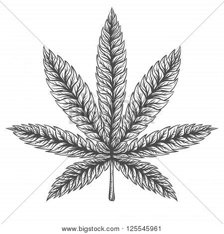 Marijuana Leaf. Hand drawn isolated illustration on watercolor background.