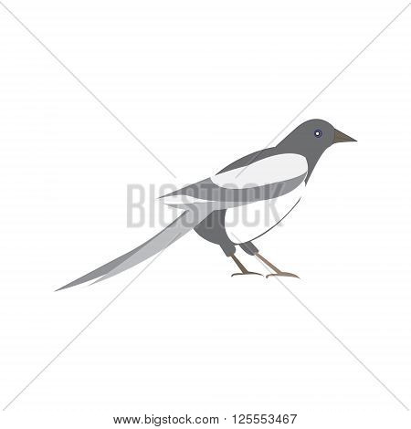 Magpie bird. Vector illustration of a black and white bird