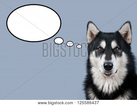 black and white dog thinking about something