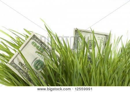Money Growth.One Hundred dollar bills growing in the green grass. Isolated on a white background. Close-up image.