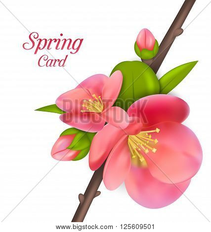 Illustration Spring Card with Branch with Buds of Japanese Quince Chaenomeles japonica in Bloom, Springtime Awakening - Vector