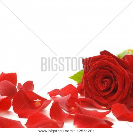 Red Rose & Petals Border