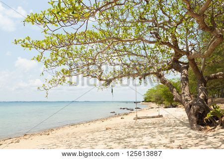 The tree and swing at the seaside of island in thailand