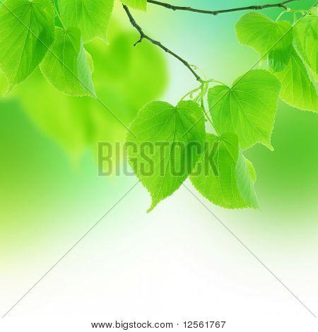 Fresh Federblätter