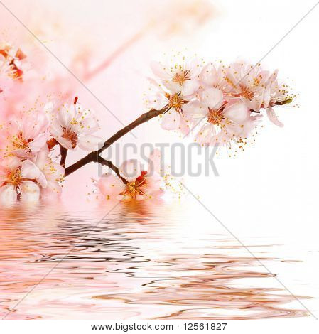Fresh Spring Blossoms