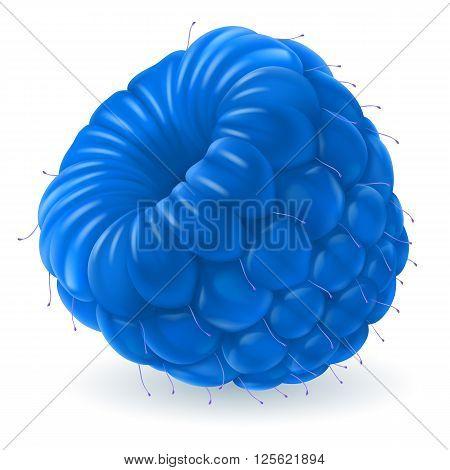 Shiny blue raspberry isolated on white background. Realistic llustration