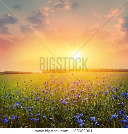 Colorful sunset and summer field.