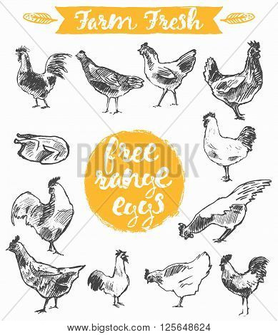 Set of a hand drawn chickens, label for a free range chicken and eggs, farm fresh chicken meat, vector illustration