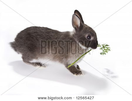 Bunny With Food