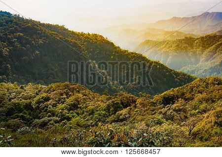 Rain forest on the mountain and the valley behind in Tak Thailand