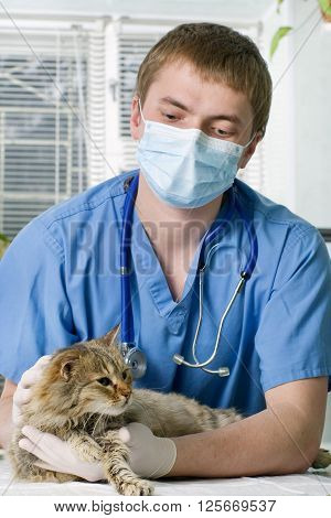 Wounded cat treated by veterinarian in clinic