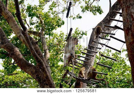 Monkeys Playing At Garden Of Phra Kal Shrine