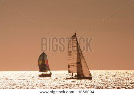 Sailboats In The Horizon