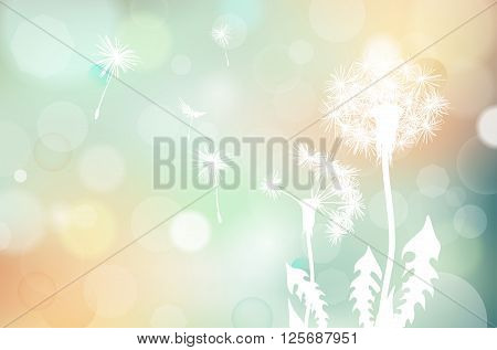 Abstract faded dandelions silhouette and blurred bokeh background - vector illustration