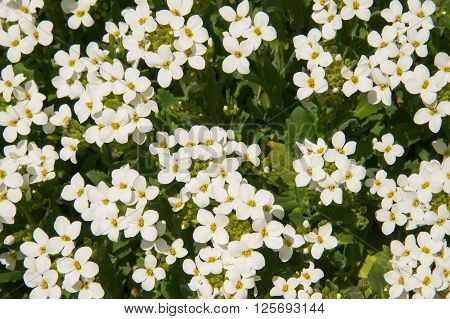 Beautiful white spring flowers background vintage style