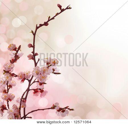 Beautiful Abstract Spring Border