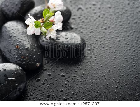 Wet Zen Spa Stones with spring blossom.Selective focus