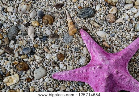 Purple starfish on gravel with colorful stones and shells on the beach, nature background