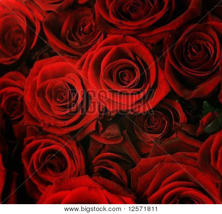 Dark Red Roses Background