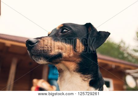 dog thinking and watching about the future outdoor