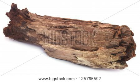 Close up of piece of bogwood over white background