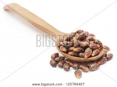 Castor beans in a wooden spoon over white background