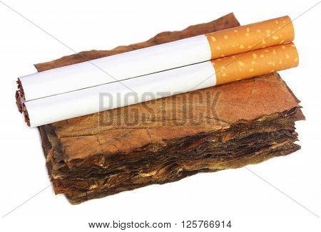 Dry tobacco leaves with filter cigarette over white background