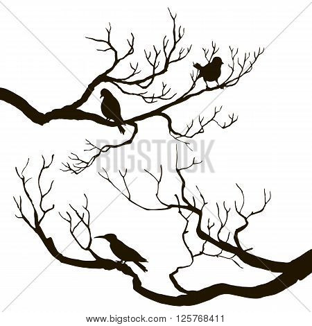 vector silhouettes of birds at tree, hand drawn songbirds at branches, hand drawn vector illustration