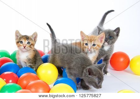 Four Kittens Playing In Colorful Balls On An Off White Background
