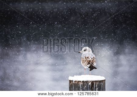 Winter silence - Bird on a cold winter day.