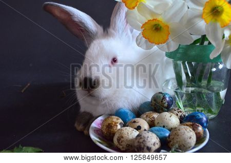 Easter bunny with Easter eggs on a black background