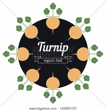Turnip vegetables illustration. Healthy Organic vegetarian food.