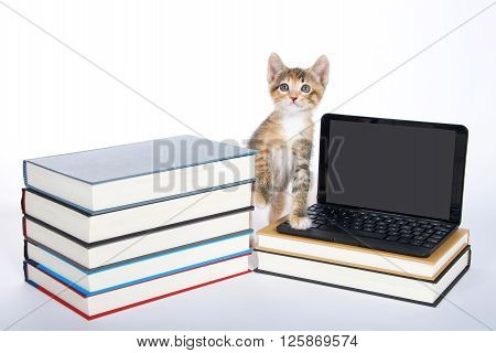 Female calico tortie tabby kitten stepping on miniature laptop type computer looking forward and up screen blank for your message. Piles of books.
