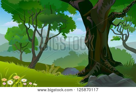TROPICAL RAIN FOREST TREES IN SUMMER