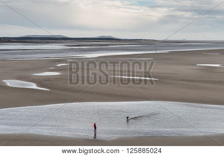 A woman out walking her dog on a windy day whilst the tide is out on the Tywi Estuary, one of the three estuaries that open out in to Carmarthern bay in Wales.