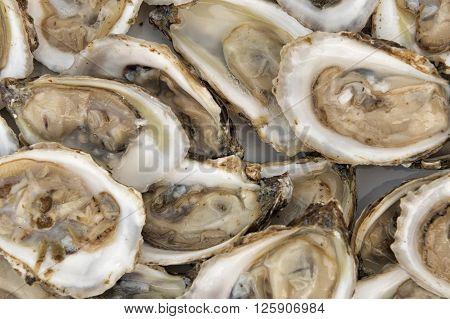 image of oysters in a plate shucked