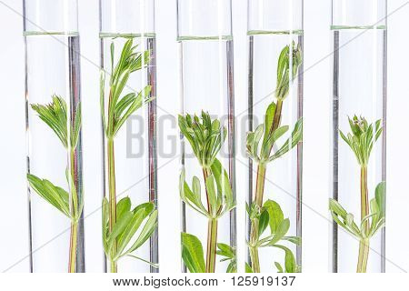 Seedling growing in laboratory undergoing experiment in glass tube