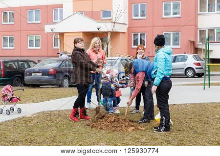 GRODNO BELARUS - MAR 26: residents of hause plant trees in the yard. Mart 26 2016 in Grodno Belarus