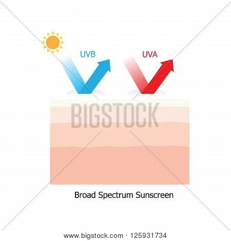 Skin with sunblock both UVA and UVB infographic