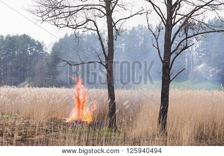 Dry grass is burning after the arson. The fire spread over the dry grass after the arson.