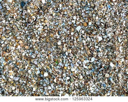 Natural sand and shells background in bright colours