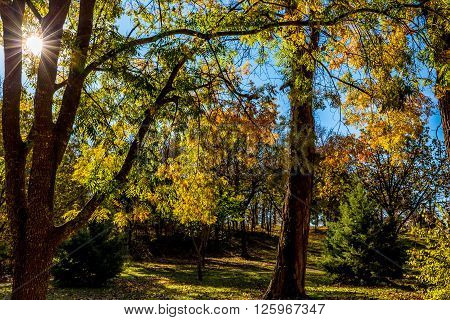 Peaceful Autumn Trees with Fall Foliage Back-lit by Morning Sun in Oklahoma Park