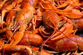closeup boiled craw fish for background uses poster