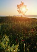 Summer sunset landscape - spreading birch at the lake coast near Ural Mountains and meadow flowers on the foreground under soft sunlight breaking through the birch brances. Soft filter processing poster