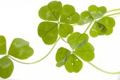 Four Leaf Clovers pattern poster
